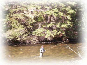fishing the taylor river