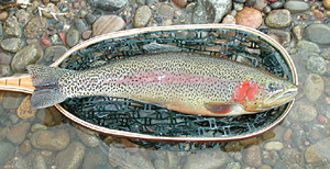 fishing in gunnison and fishing in crested butte