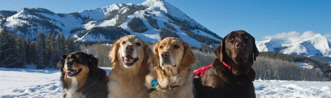 pet friendly vacation rental in crested butte